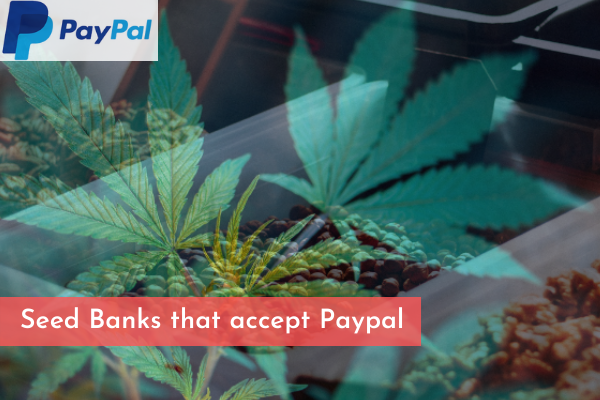 Seed Banks that accept Paypal