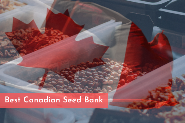 Best Canadian Seed Bank