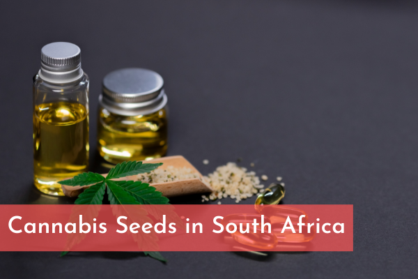 Cannabis Seeds in South Africa