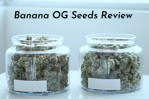 Banana OG Seeds Review