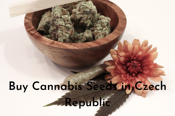 Buy Cannabis Seeds in Czech Republic
