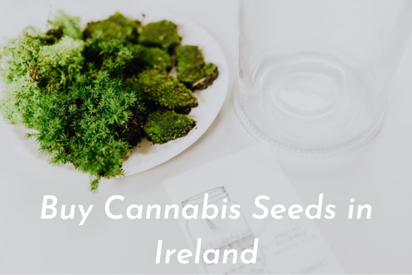 Buy Cannabis Seeds in Ireland
