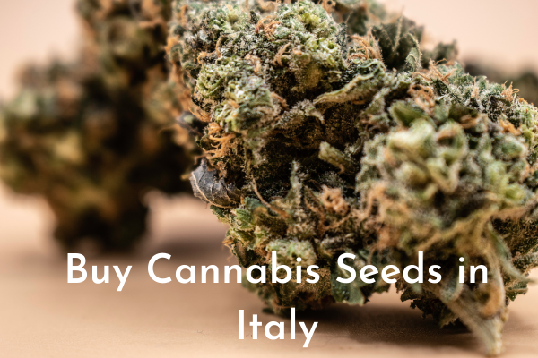 Buy Cannabis Seeds in Italy