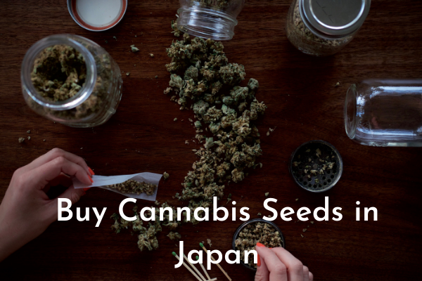 Buy Cannabis Seeds in Japan