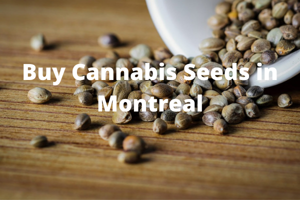 Buy Cannabis Seeds in Montreal