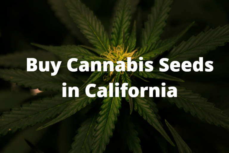 Cannabis Seeds in California