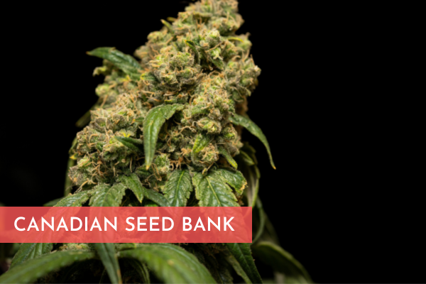 CANADIAN SEED BANK