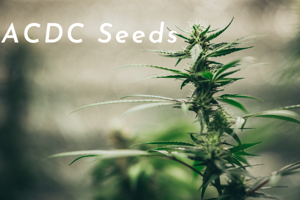 ACDC Seeds